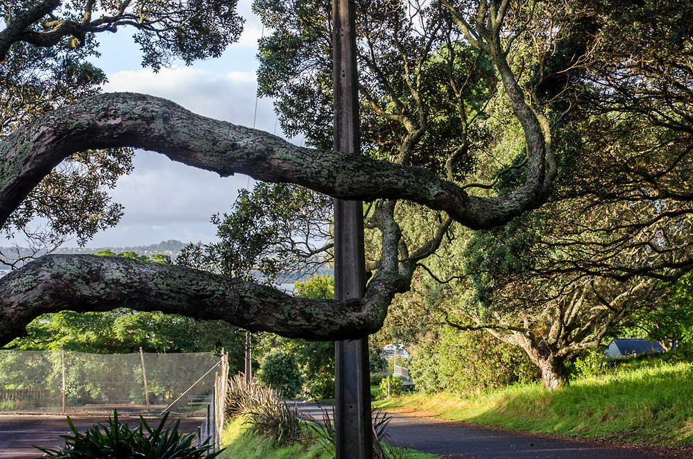 Bent, photo by Mary Macpherson, Pohutukawa, Devonport, Auckland, photospace gallery exhibition February 2014
