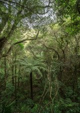 Bush scene in Wellington photographed by Sue Guest, Into the everyday - scenes from the Wellington bush, New Zealand bush lanscape photography, Photospace Gallery fine art photography New Zealand