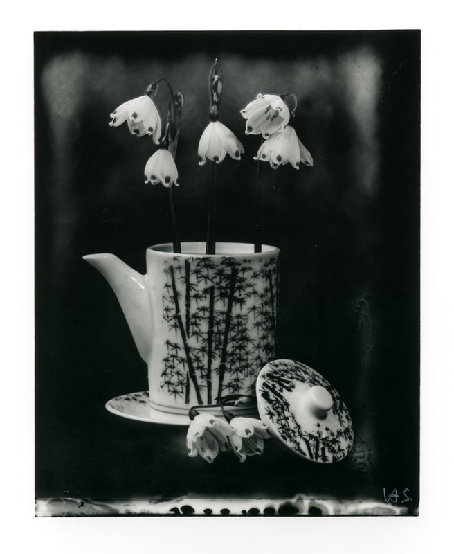 Heinz Sobiecki - Flower series 2019. Unique print on silver gelatin paper from Polaroid large format negative, Photospace Gallery Contemporary NZ Photography Wellington New Zealand, black and white photography, still life photograph