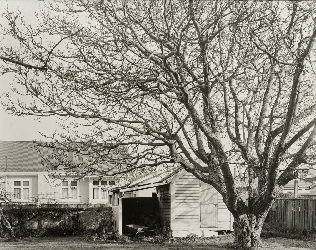 'Walnut tree, Te Ore Ore Rd, Masterton, 29/8/2016' - toned silver-gelatin contact print by Andrew Ross, large format black and white photography, fine art photograhy New Zealand, Photospace Gallery contemporary New Zealand art photography